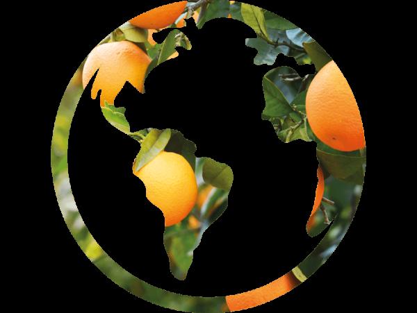 citricos-todo-el-ano-gustavo-ferrada